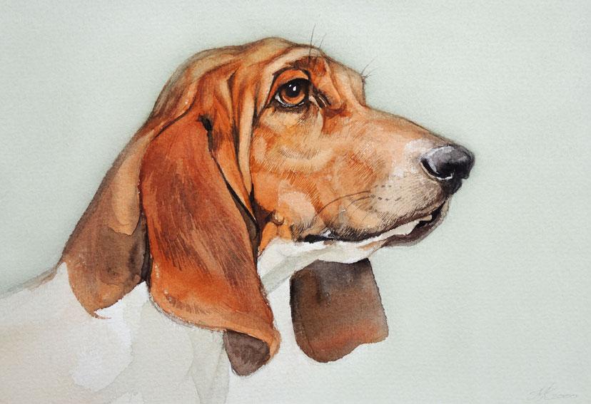 Basset Hound - 24 x 17 cm