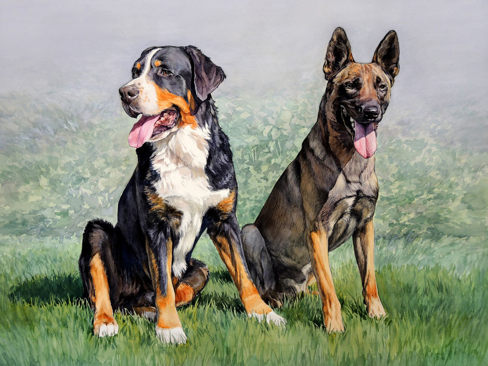 Bernese Mountain Dog and Belgian Shepherd