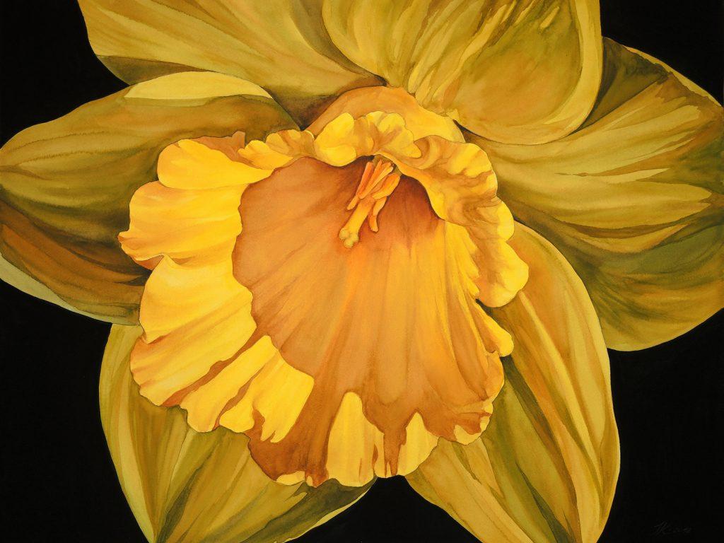 Daffodil - 72 x 55 cm