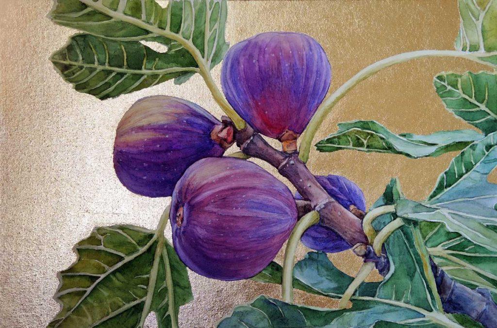 Figs Watercolor