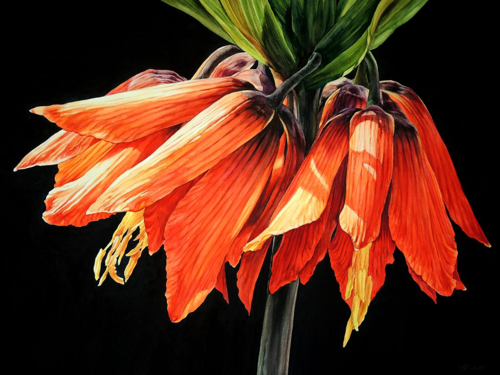 Fritillaria - 72 x 55 cm