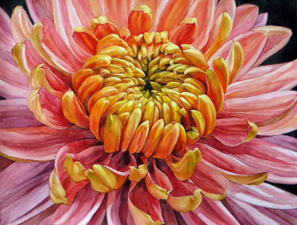 Pink Chrysanthemum - 55 x 42 cm