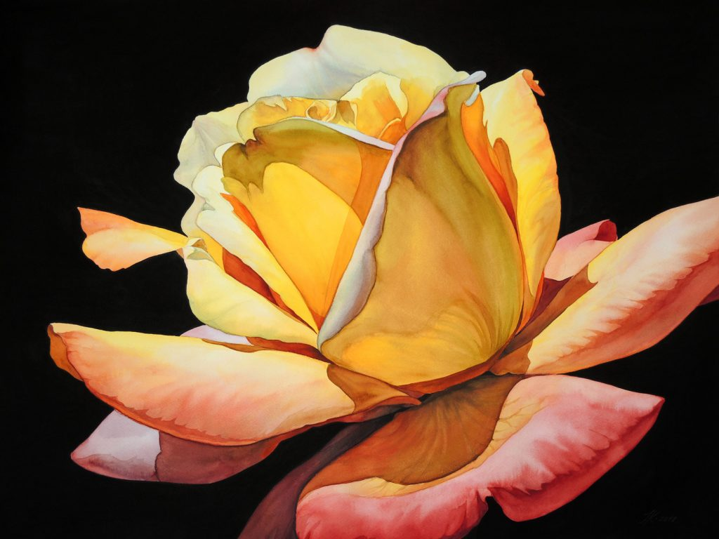 Rose - 72 x 55 cm