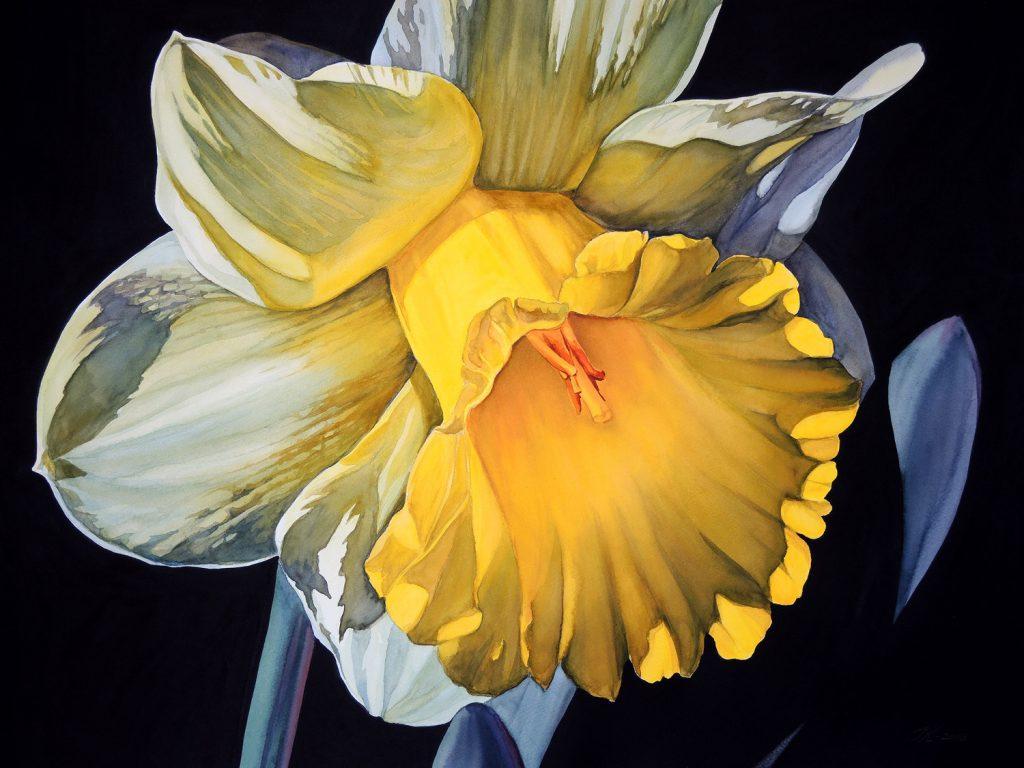 Sunny Daffodil - 72 x 55 cm