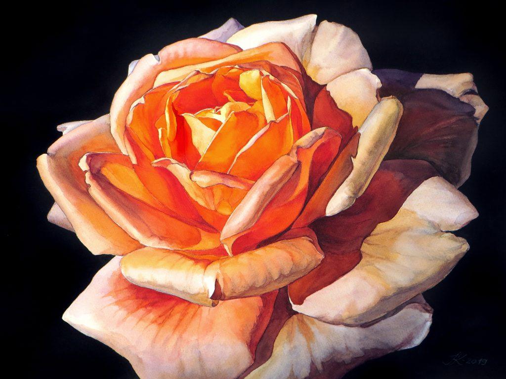 Sunny Rose - 72 x 55 cm