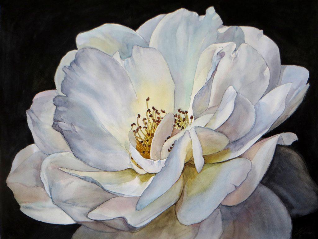 White Rose - 55 x 42 cm