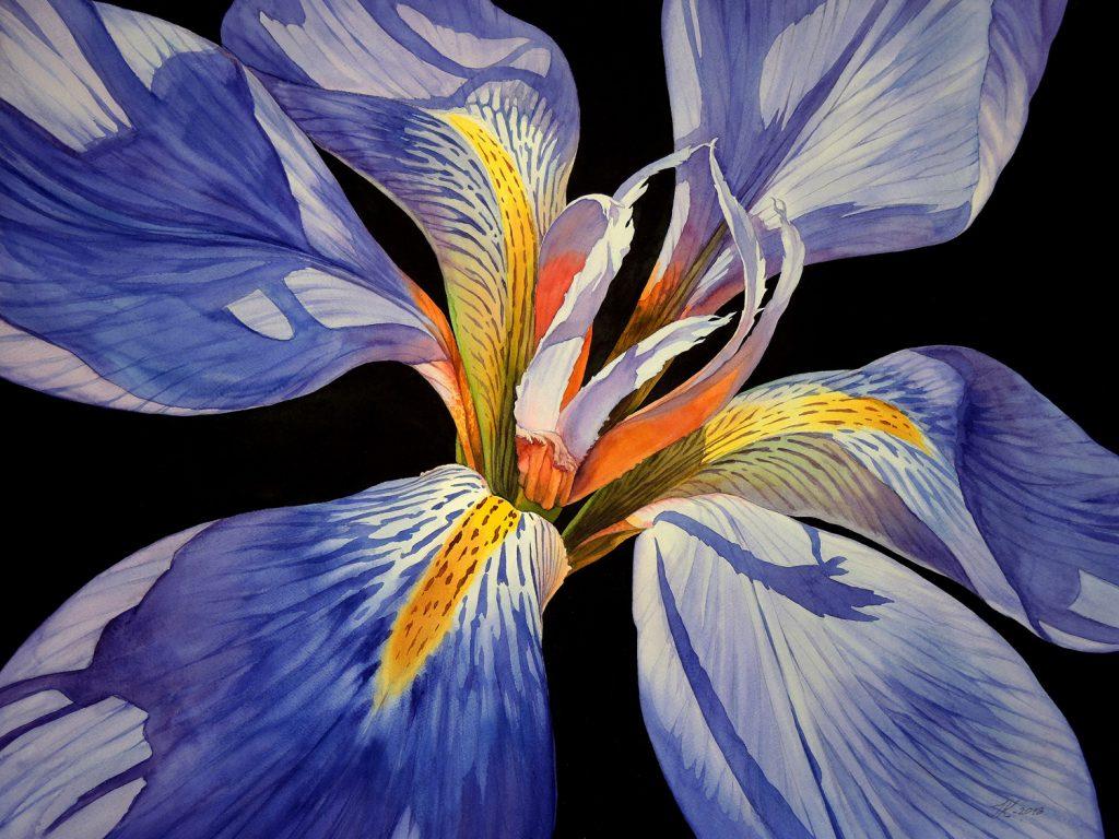 Wild Iris - 72 x 55 cm